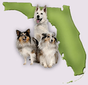 Florida Dogs